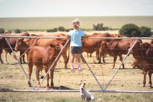 Clipping – Folha do Bico – Titulares de imóveis rurais podem solicitar emissão do Certificado 2020
